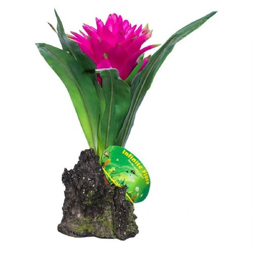 LR Bromelia Guzmania Red 35cm IF-26 PLP156